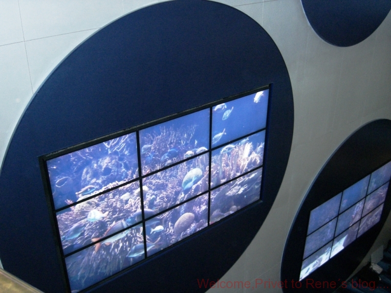 blaue-bar-aquarium