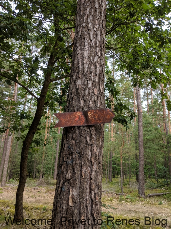 Impressionen aus der Tangersdorfer Heide 2019